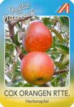 Cox Orangen Reinette Apfel