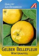 Gelber Bellefleur Apfel
