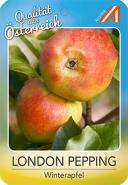 London Pepping Apfel