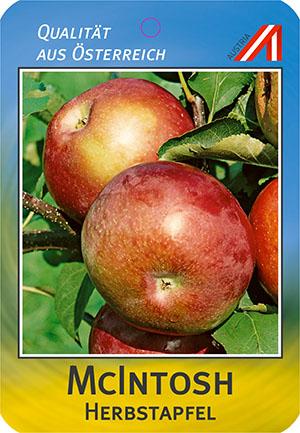 Mc Intosh Apfel