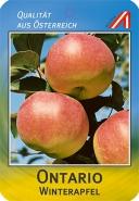 Ontario Apfel