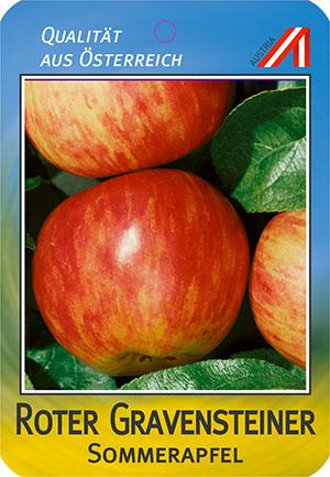 Roter Gravensteiner Apfel