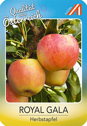 Royal Gala Apfel
