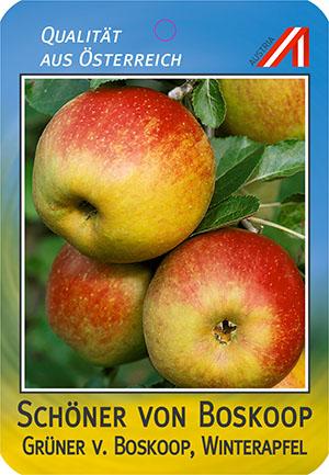 Schöner v. Boskoop Apfel