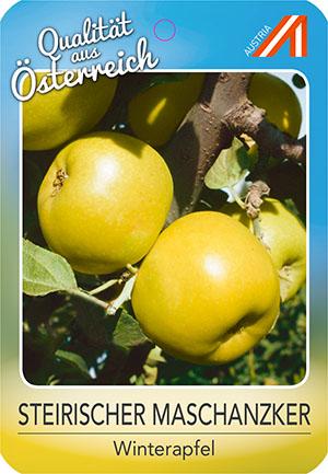 Steirischer Maschanzker Apfel