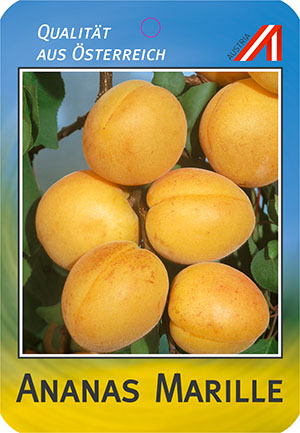 Ananas Marille