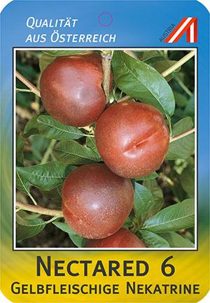Nectared 6 Pfirsich