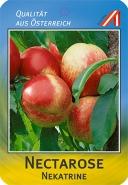 Nectarose Pfirsich