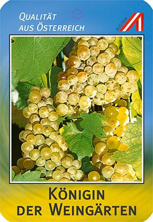 Königin der Weingärten Weinreben
