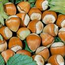 Nüsse - Kastanien